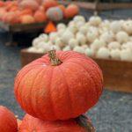 Pumpkin Patch Abbotsford