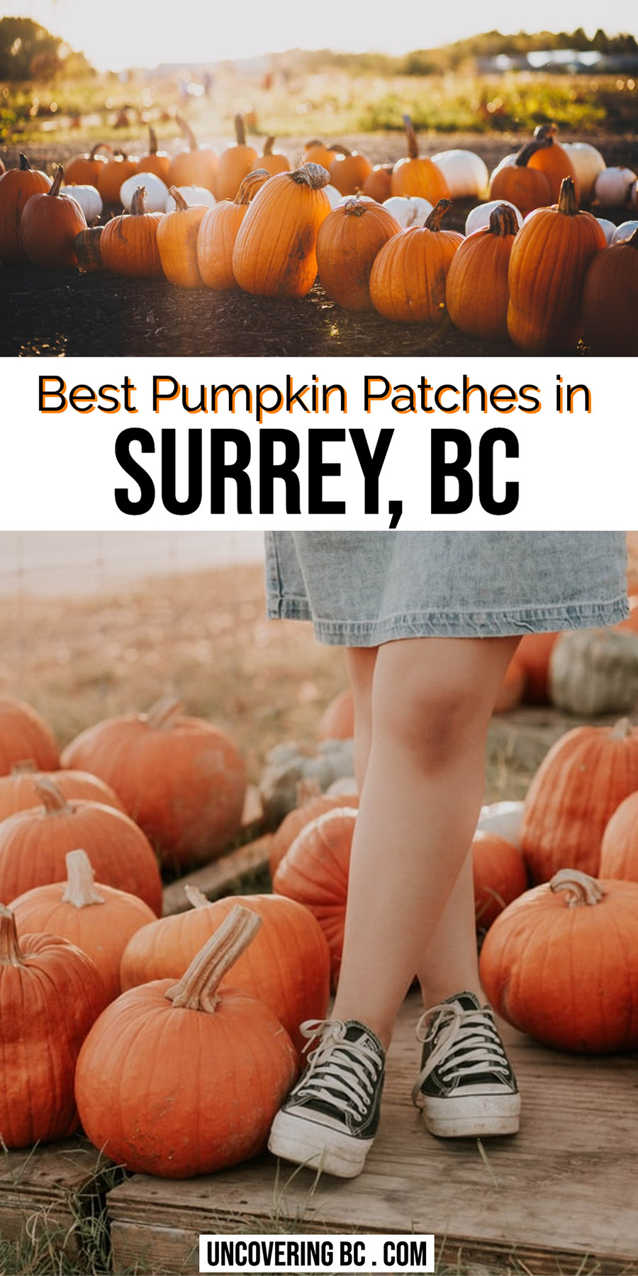 pumpkin picking surrey