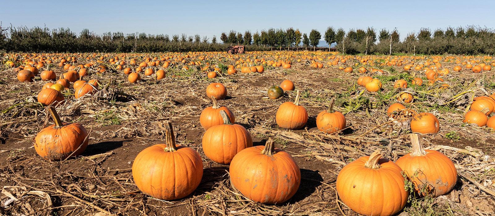 pumpkin patch surrey bc