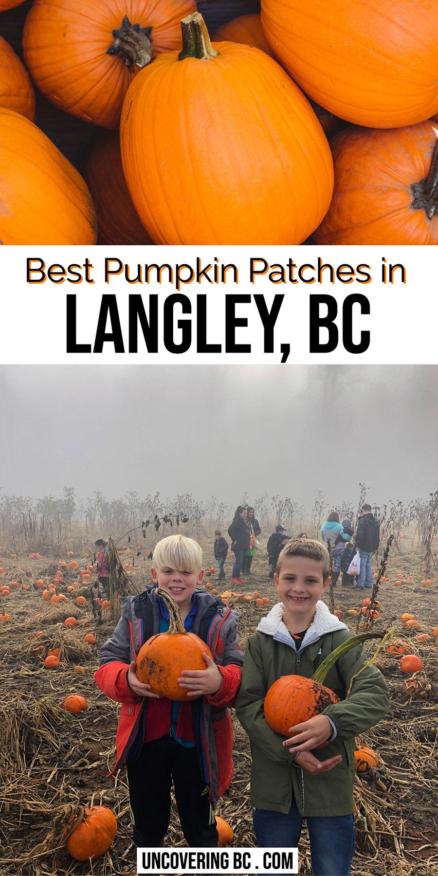 Pumpkin Picking Langley Pumpkin Patch