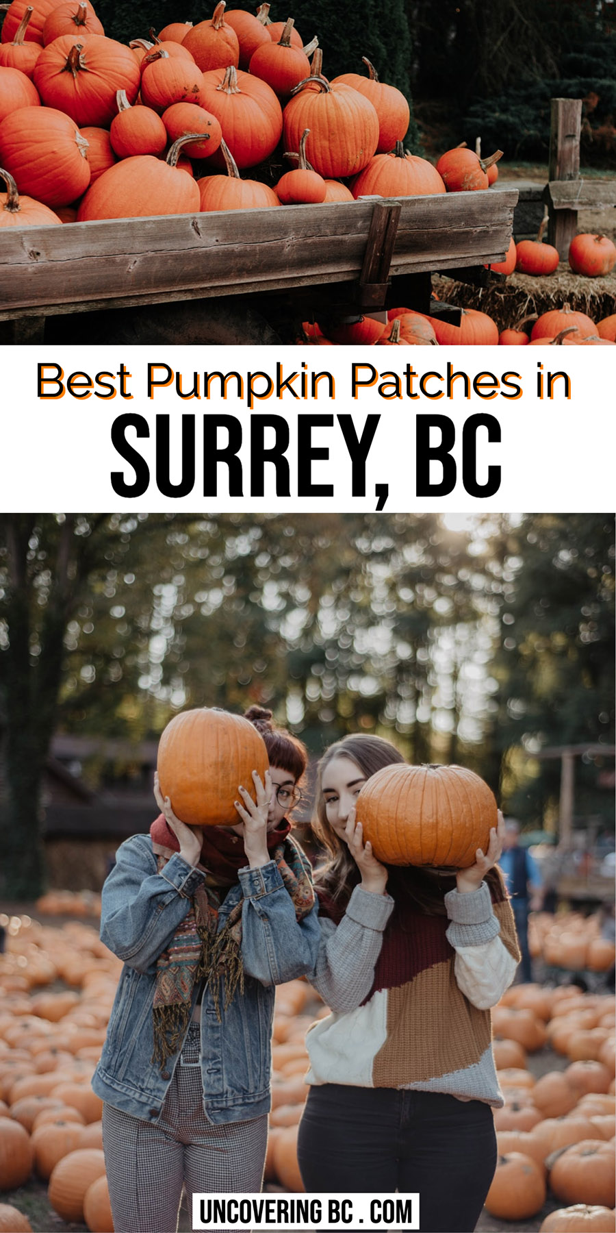 Surrey Pumpkin Patch