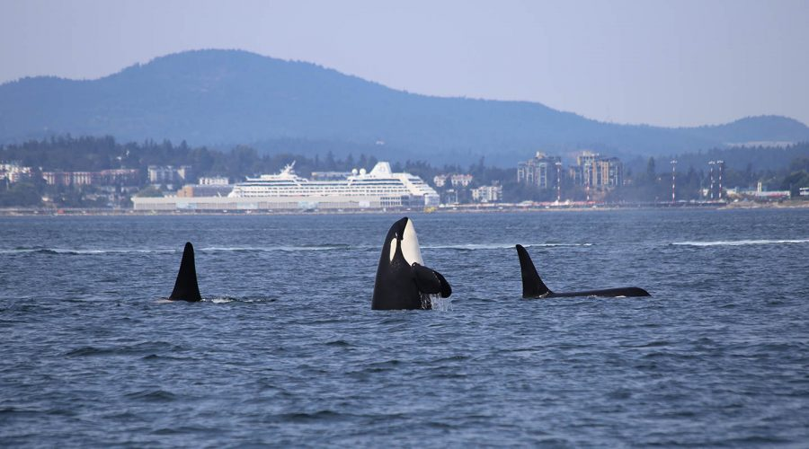 Whale Watching in Vancouver.