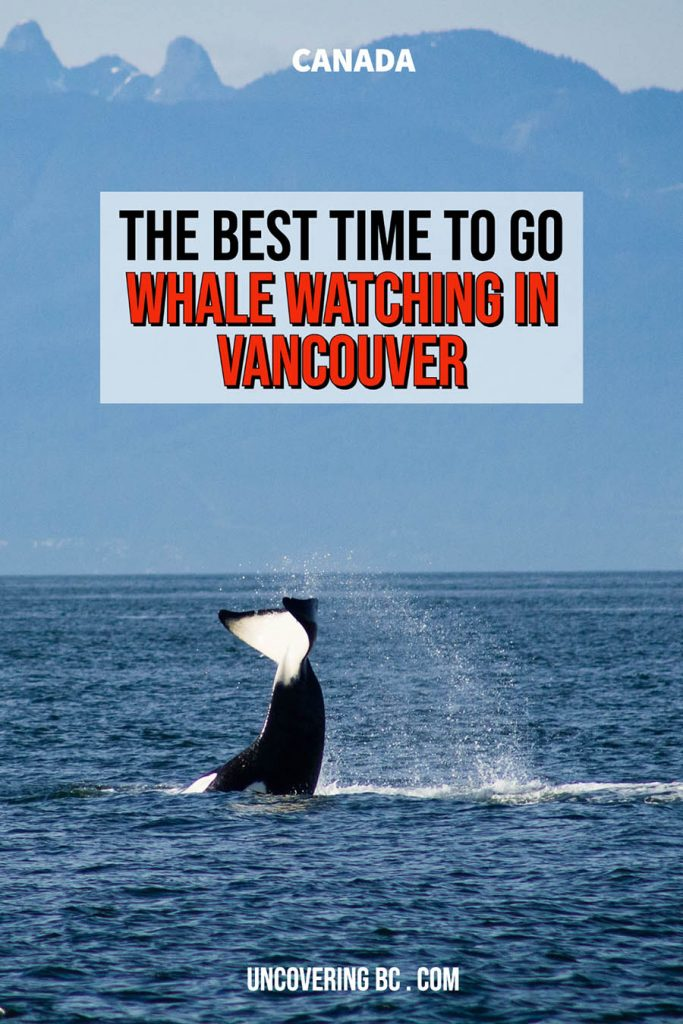 When is the best time to go whale watching in Vancouver?