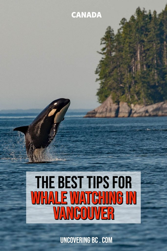 whale watching Vancouver season.