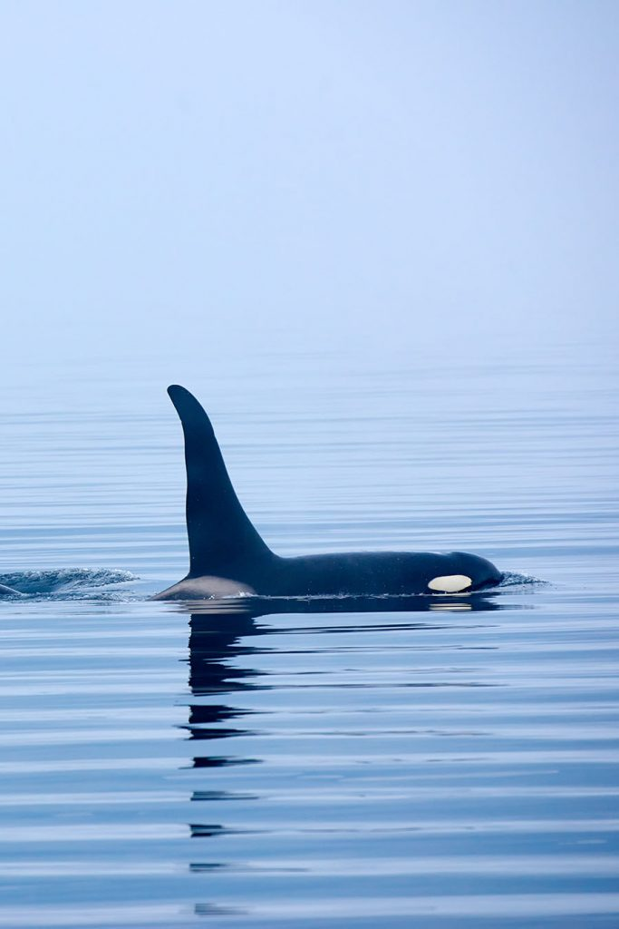 Best Time to go whale watching in Vancouver
