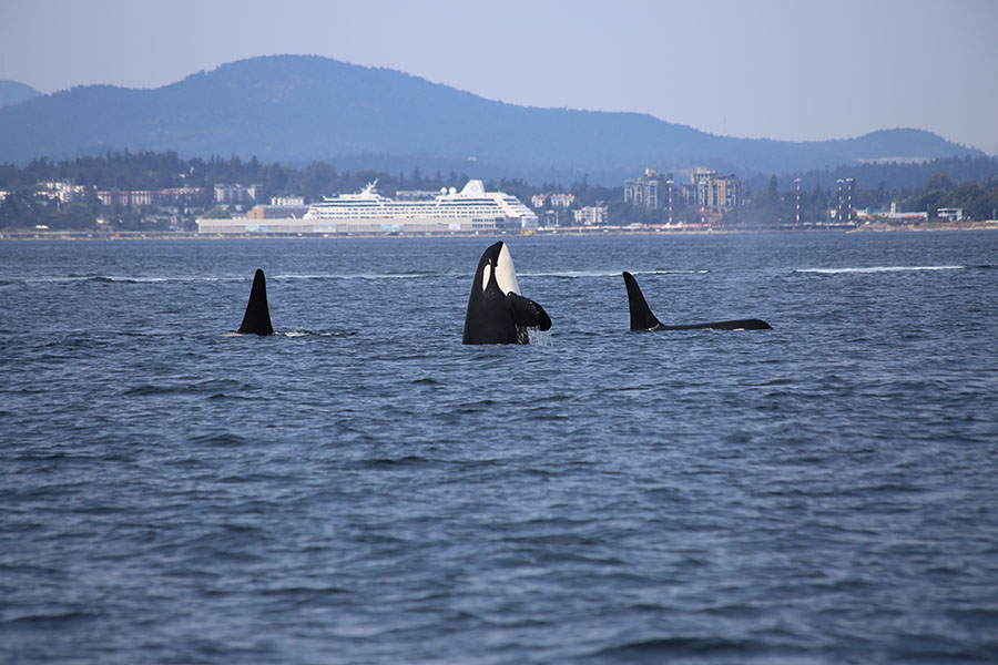 Vancouver - Whale Watching