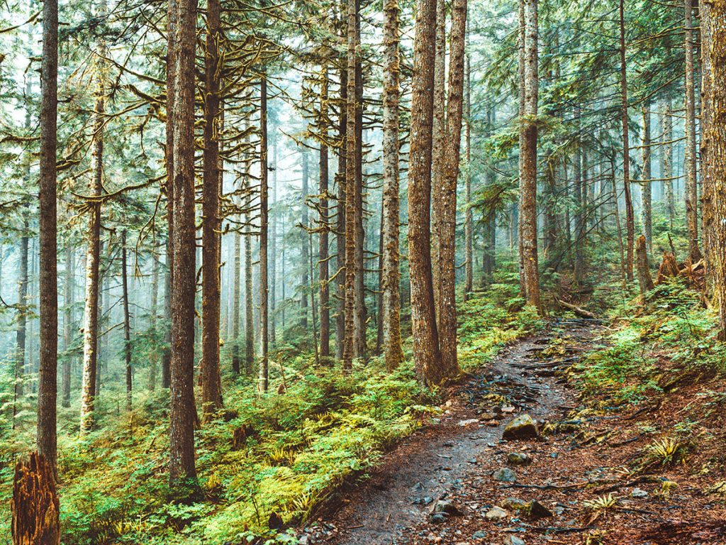 North Vancouver - Norvan Falls Trail