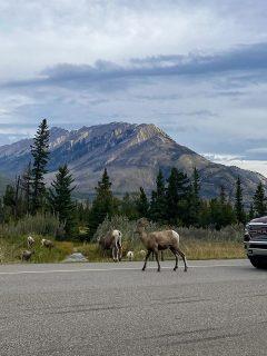 from Edmonton to Jasper driving